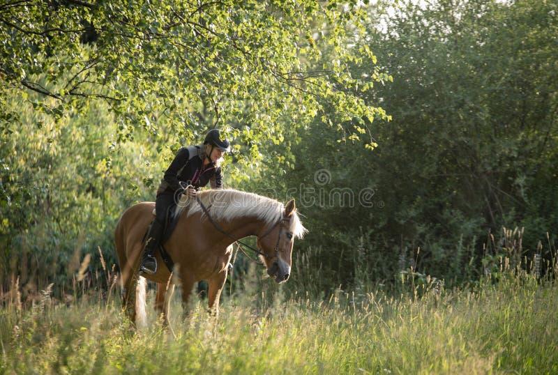 Equitação da mulher no por do sol fotos de stock