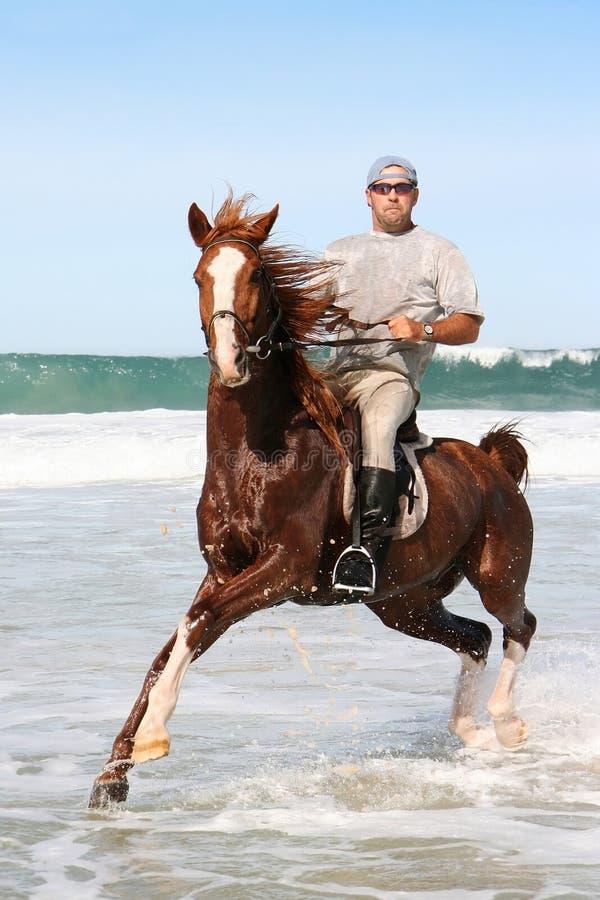 Equitação de cavalo no mar imagem de stock