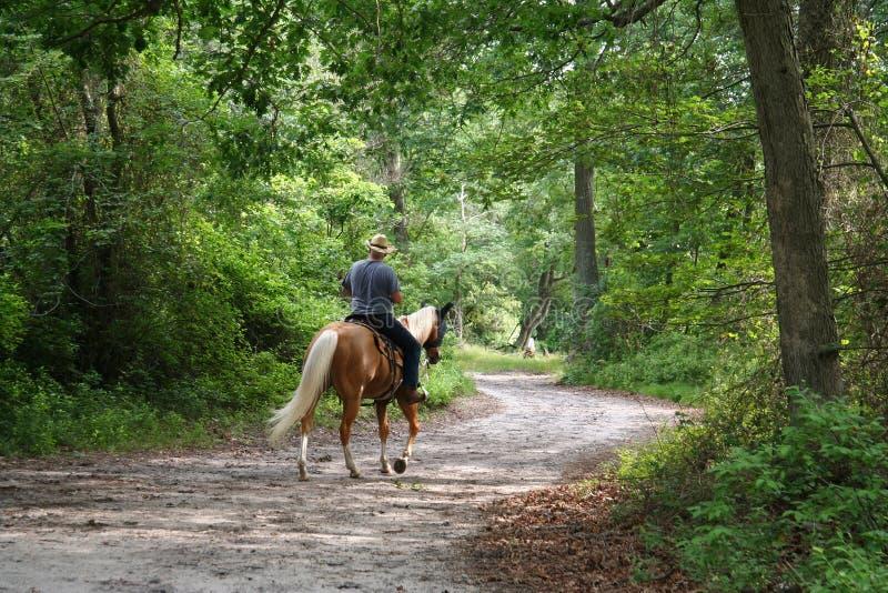 Equitação de Horseback do homem fotografia de stock royalty free
