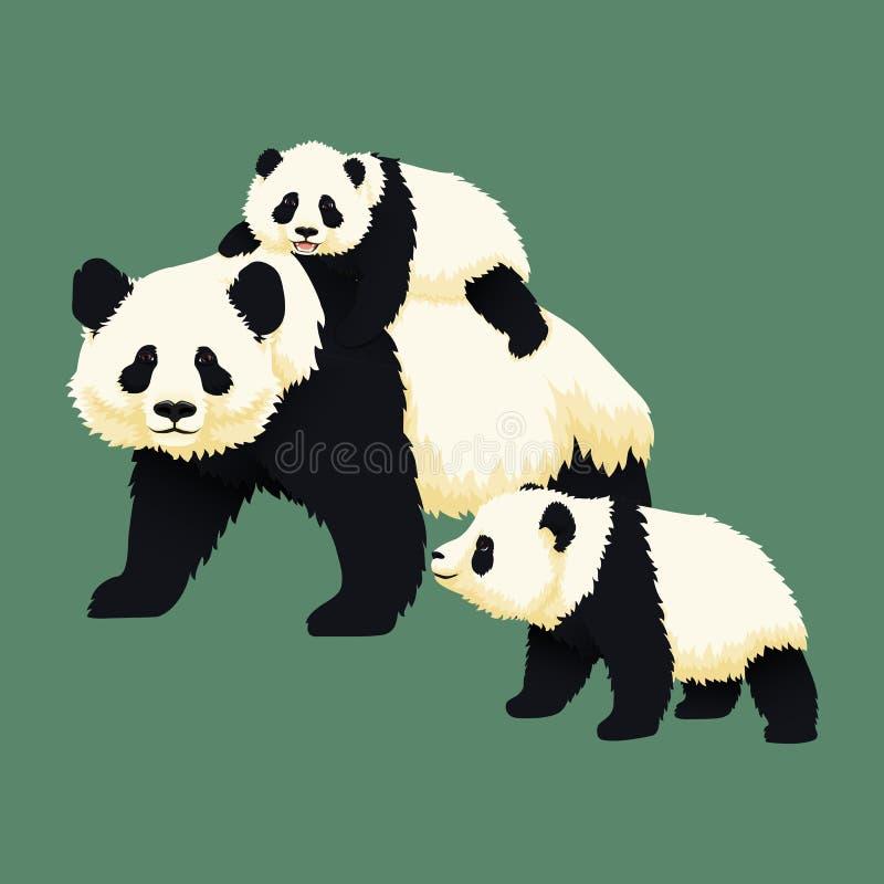 Equitação de sorriso feliz da panda gigante do bebê na parte de trás de uma panda adulta com um outro filhote da panda que anda p ilustração stock