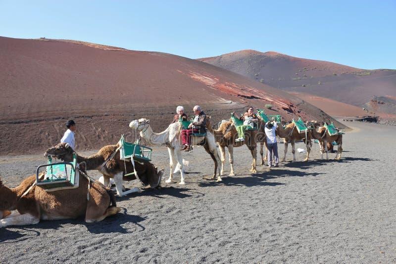Equitação do camelo no parque nacional de Timanfaya, Lanzarote fotografia de stock