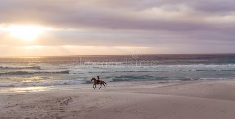 Equita??o na praia no por do sol foto de stock