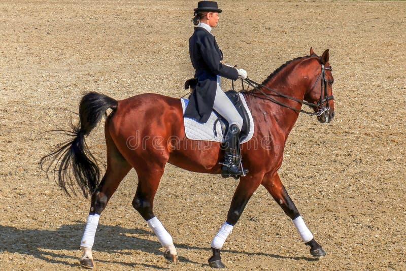 Equitación de la mujer elegante en caballo marrón imágenes de archivo libres de regalías