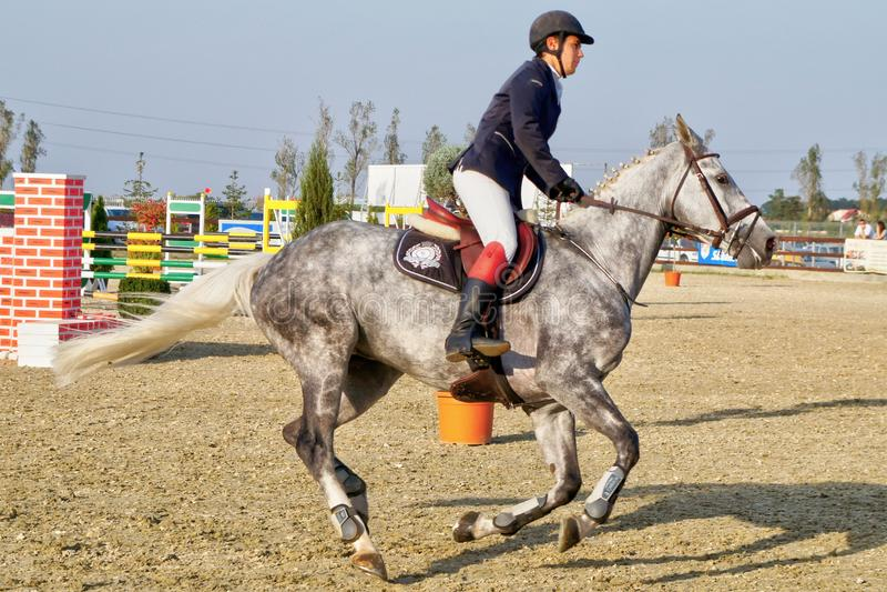 Equitación del jinete en el galope gris criado en línea pura del caballo fotografía de archivo libre de regalías