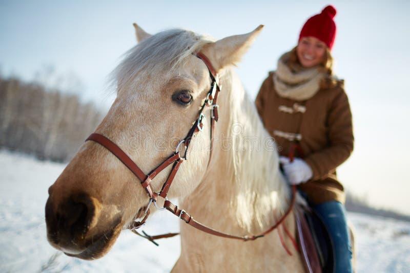 equitation royaltyfri bild