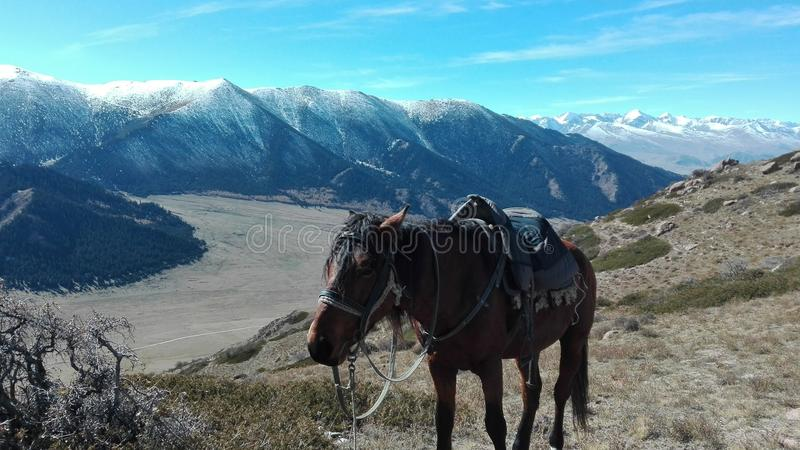 Equitazione in Kyrgzystan fotografia stock