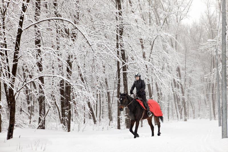 Equitazione in legno di inverno immagine stock libera da diritti