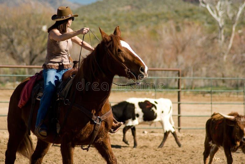 Equitazione nel deserto fotografie stock