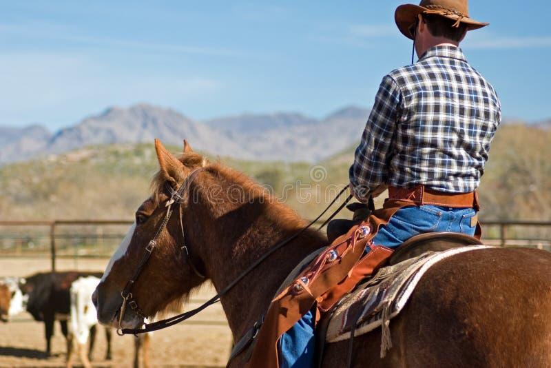 Equitazione nel deserto fotografie stock libere da diritti