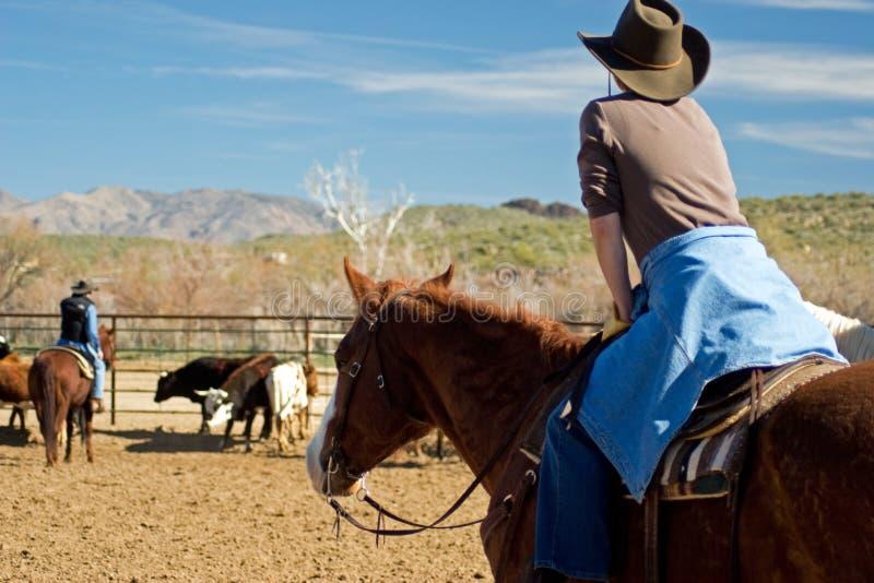 Equitazione nel deserto immagine stock
