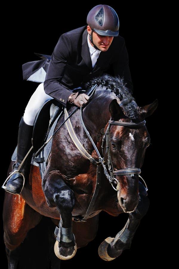 Equites: cavaliere con il cavallo di baia nella manifestazione di salto, isolata immagini stock libere da diritti