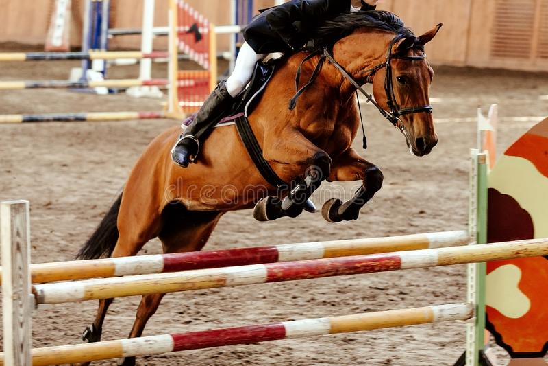 Equites sull'ostacolo di salto del cavallo immagini stock