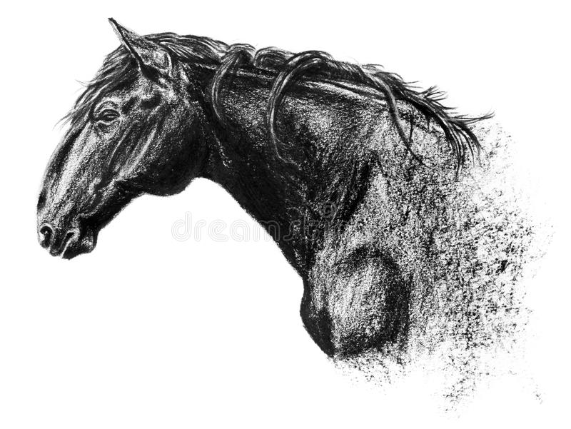 Equus bohemicus, the kladruber drawing, charcoal portrait isolated on white vector illustration