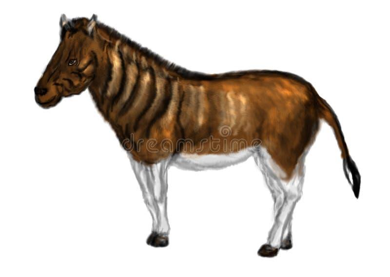 Equus quagga quagga. Animal isolated on white background royalty free illustration