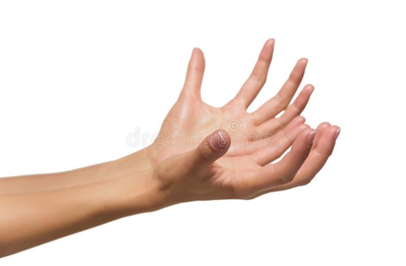Eröffnen Sie eine Frau ` s Hand, Palme stockbild