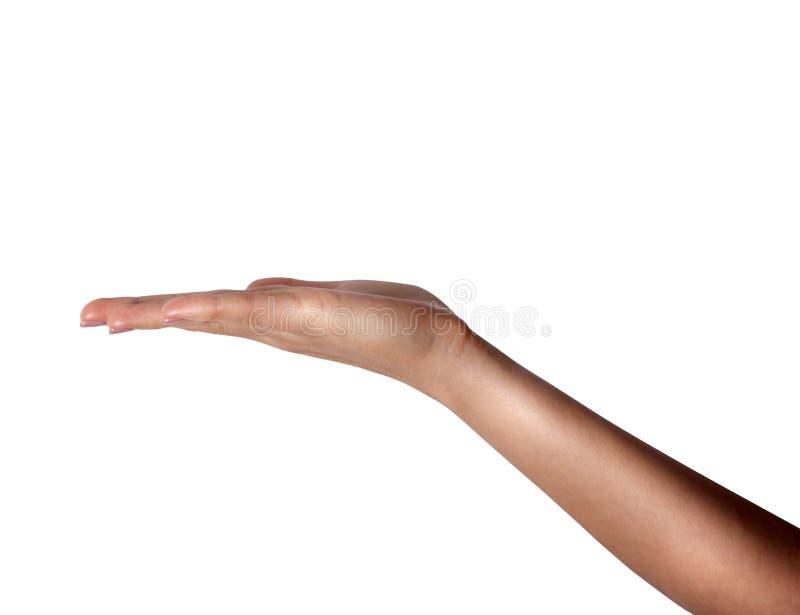 Eröffnen Sie eine Frau ` s Hand, Palme stockfotografie
