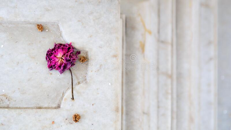 Er is een roos, ik waarwil leven voor stock fotografie