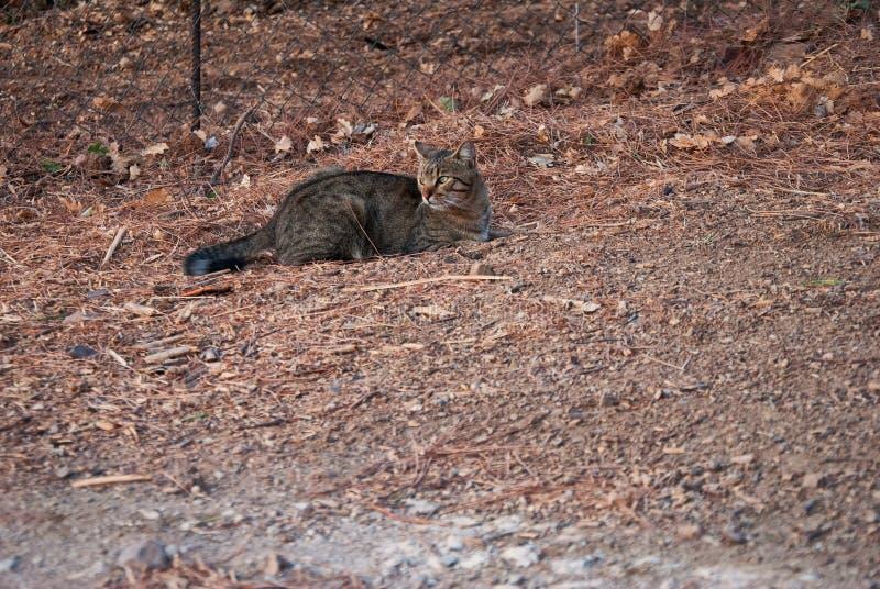 Er is geen betere jager als kat royalty-vrije stock foto