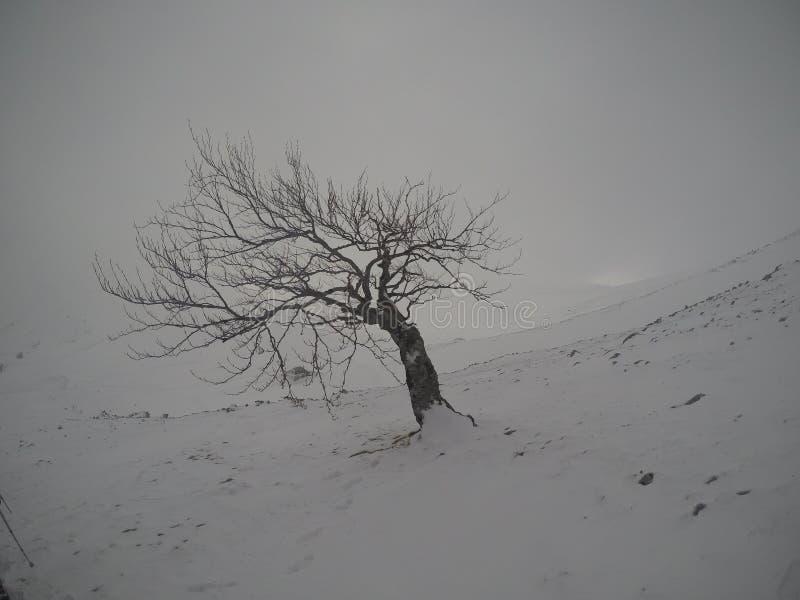 Era um momento tão bonito em que eu visse esta árvore surpreendente fotografia de stock