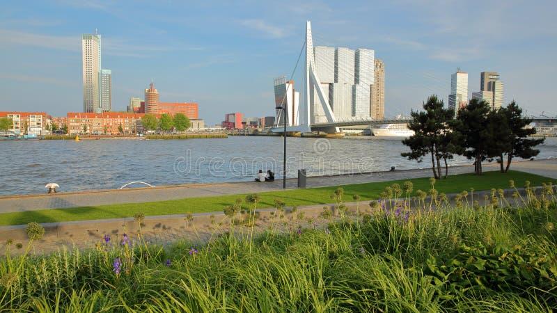 Erasmus-bro som beskådas från den Boompjeskade flodstranden, med moderna skyskrapor i bakgrunden, Rotterdam royaltyfri foto
