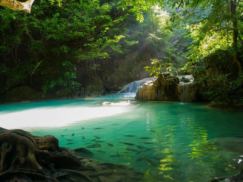 Erawanwatervallen, mooie altijdgroen stock foto