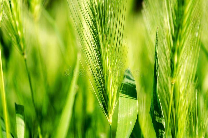Download Erba fotografia stock. Immagine di fresco, verde, erba - 55359700