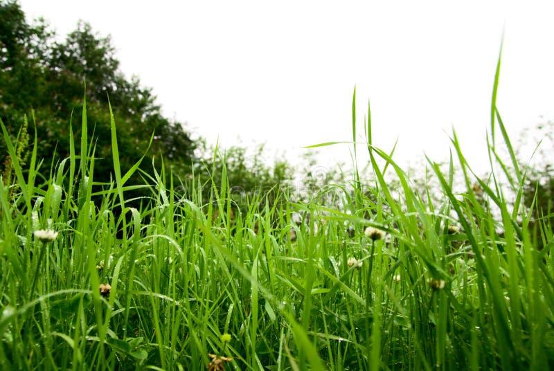 Download Erba fotografia stock. Immagine di terra, flora, luminoso - 7313654