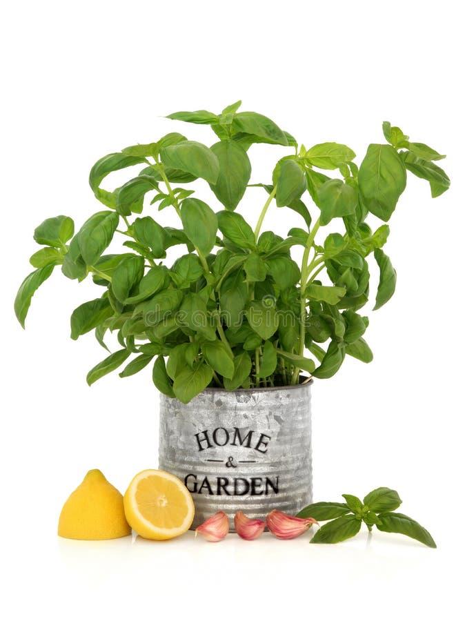 Erba, aglio e limone del basilico fotografie stock