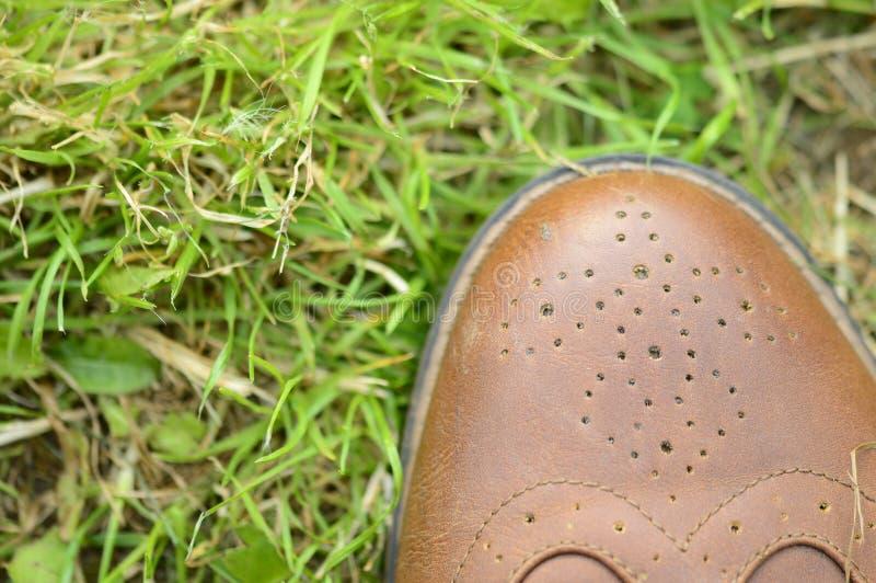 Erba ai vostri piedi immagine stock libera da diritti