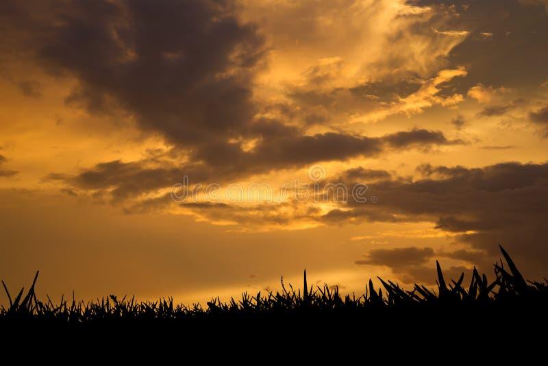 Erba al tramonto immagini stock libere da diritti