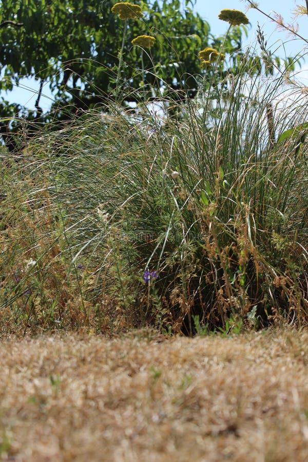 Erba asciutta e piante nel giardino fotografia stock libera da diritti