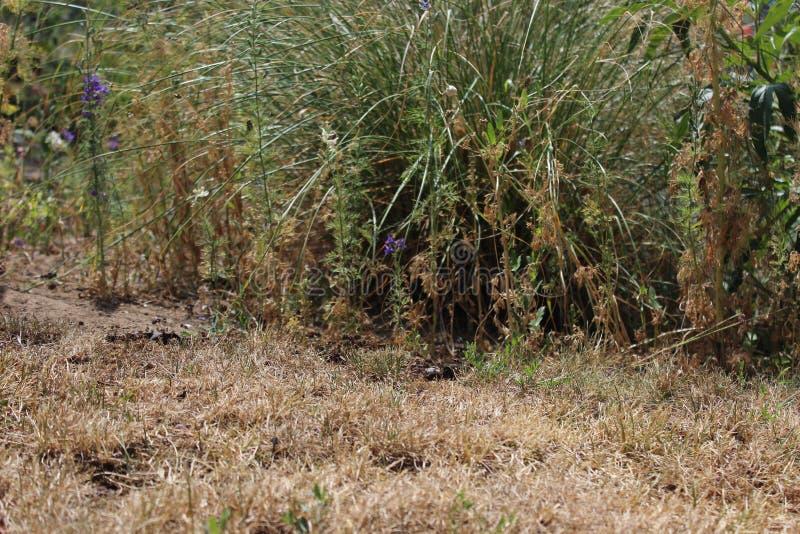 Erba asciutta e piante nel giardino immagine stock libera da diritti
