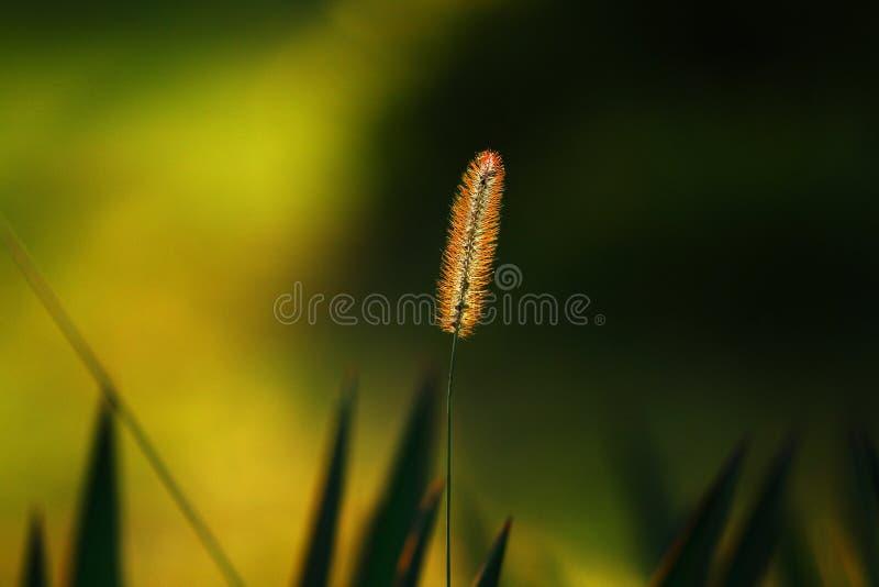 Erba in autunno fotografia stock