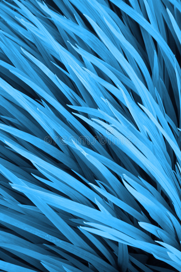Erba blu fotografia stock libera da diritti