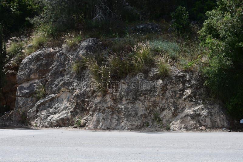 Erba che cresce sulle pietre Il monte Carmelo l'israele immagini stock