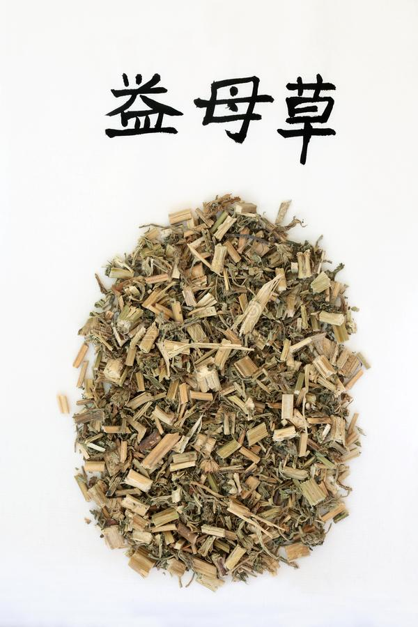 Erba cinese del Motherwort fotografia stock