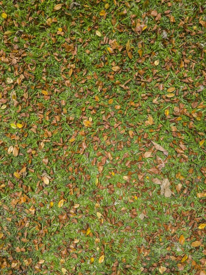 Erba con le foglie asciutte fotografia stock libera da diritti