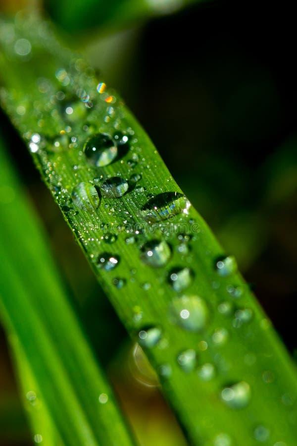 Erba con le gocce della pioggia fotografie stock libere da diritti