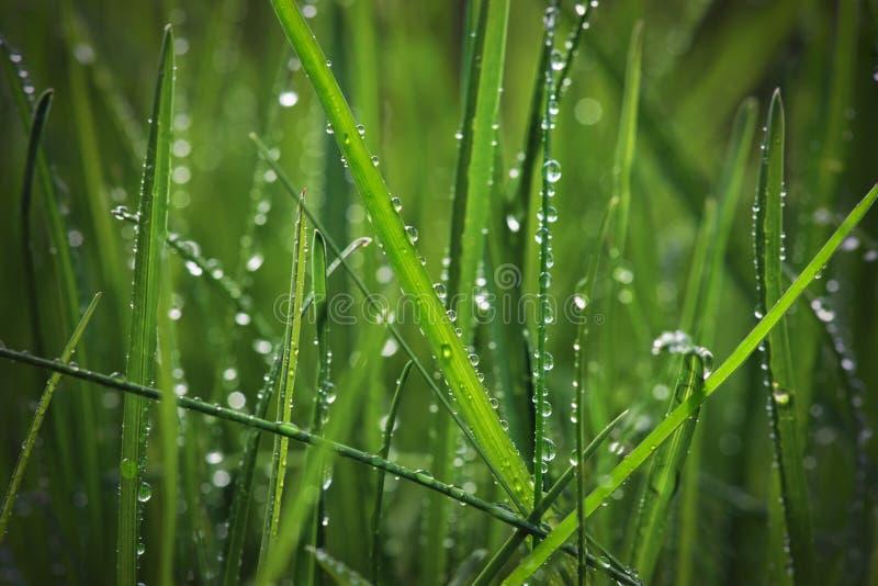 Erba con le gocce di pioggia immagine stock