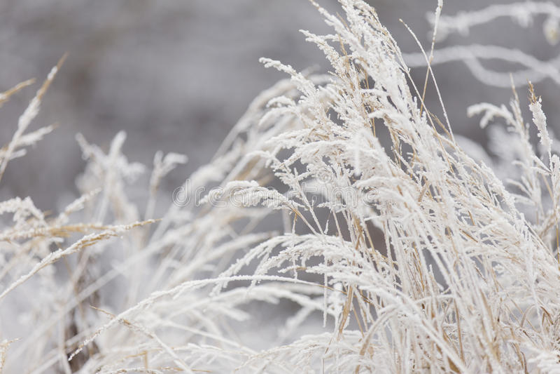 Erba coperta di gelo fotografia stock libera da diritti