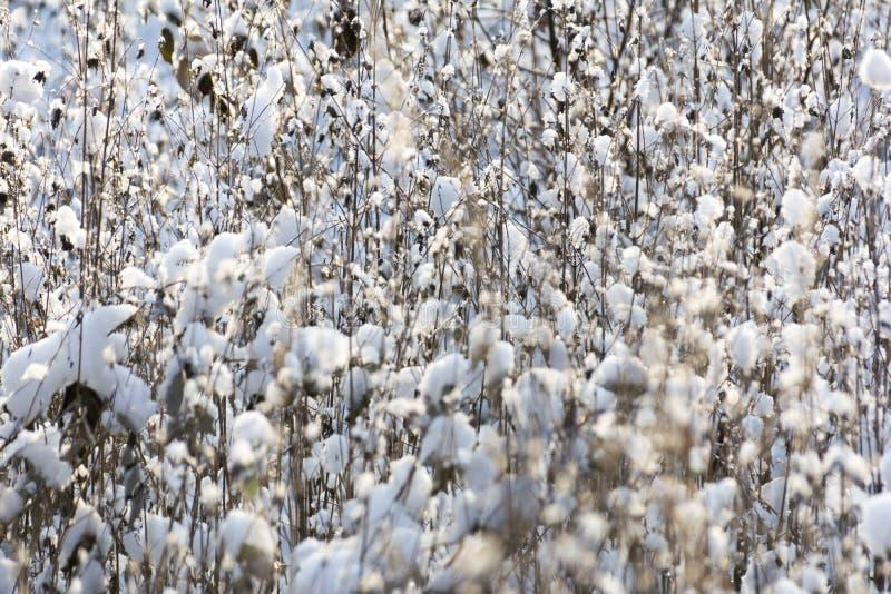 Erba coperta di neve fotografie stock