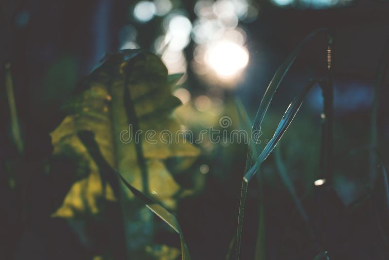 Erba d'annata di sguardo nel tramonto fotografia stock