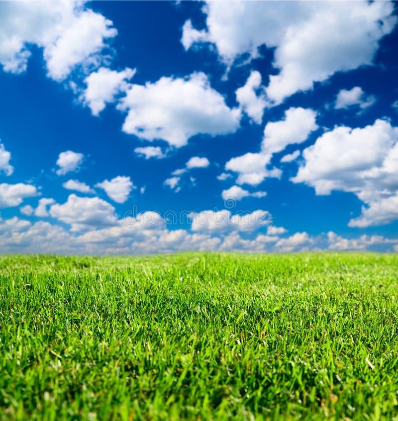 Download Erba del campo immagine stock. Immagine di fresco, cielo - 7314295