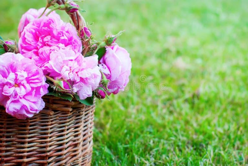 Erba del canestro di Rose Pink Rosa Canina Flowers del cane immagini stock libere da diritti