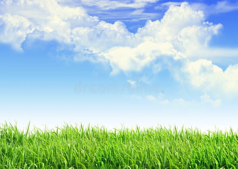 Erba del cielo fotografie stock libere da diritti
