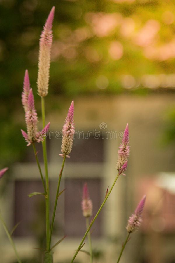 Erba del fiore nel fondo molle di colore immagine stock