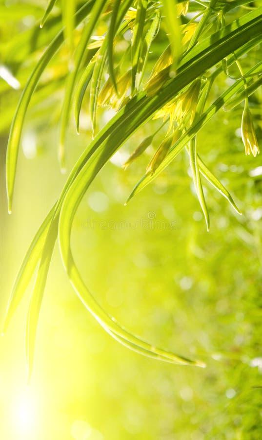 Erba del giardino, mattina piena di sole immagine stock