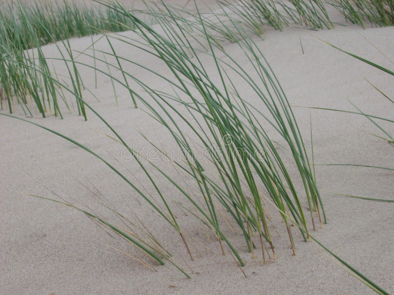Erba della duna fotografie stock libere da diritti