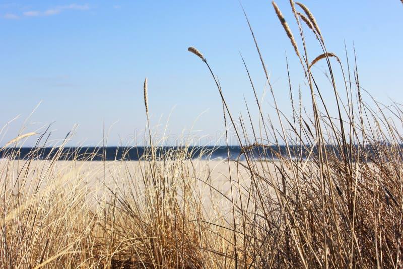 Erba della duna con l'oceano nei precedenti fotografia stock