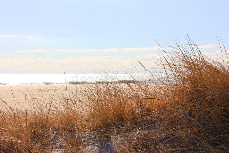 Erba della duna di inverno alla spiaggia fotografie stock